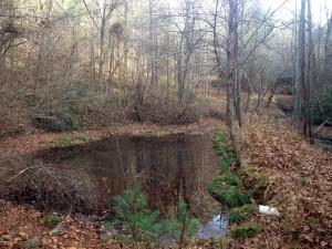 Preserved property in Polk County, TN.
