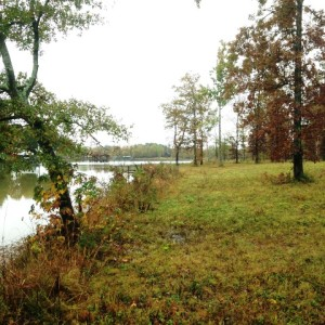 Cherokee County, Alabama – This 57 acre property located in Cherokee County, AL, was a former plantation that was cut with remnant oaks left behind. The tract consists of semi-cleared fields with prairie species identified on them and includes a marsh. The property is located on Weiss Lake, which is part of a blueway waterway, and there are several protected areas nearby.