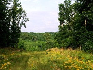 Humphreys County, TN – FLC worked with landowners to preserve a 1009 acre tract in Humphreys County, TN.  Located near the Duck River, the site was planned for development at one point. There is a nice hardwood forest with creeks on the bottom side.