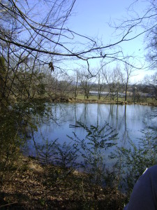 Spring fed pond provides a water source for migrating and native wildlife.
