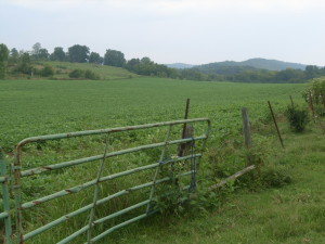 The Harris Farm is currently leased for farming and produces both row crops and hay.