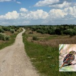 Another image of property with a photo of the Henslow's Sparrow.