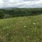 This undeveloped and open tract located on the Cumberland Plateau is mostly covered in ruderal vegetation of early to mid-successional stages, and includes saplings, shrubs, grasses, and forbs.