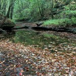 The conservation area contains over 3 miles of streams, which are tributaries to the Cumberland River.
