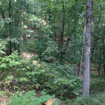 Photo of Interior Low Plateau Chestnut Oak-Mixed Oak Forest