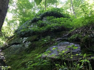 This property contains natural communities such as uncommon Rich Cove Forest types, rock outcrops and other habitats.