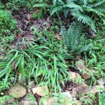 Photo of stream bed vegetation taken during a site visit.