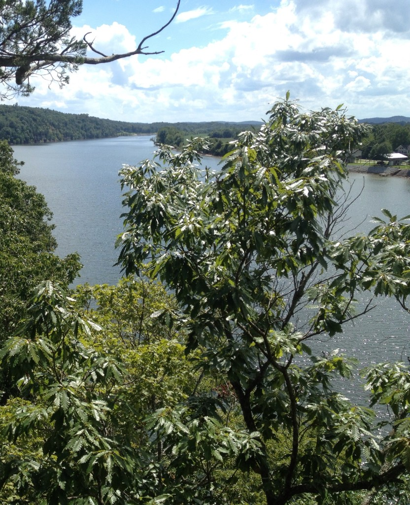 Image of Tennessee River taken from the bluff of a newly preserved property in Perry County, TN.