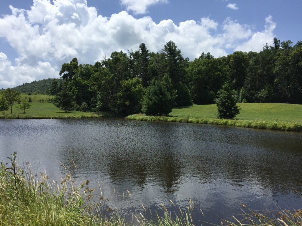 View of pond on recently preserved property in Watauga Co., NC.