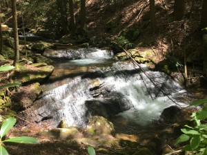 One of several small creeks on the property.