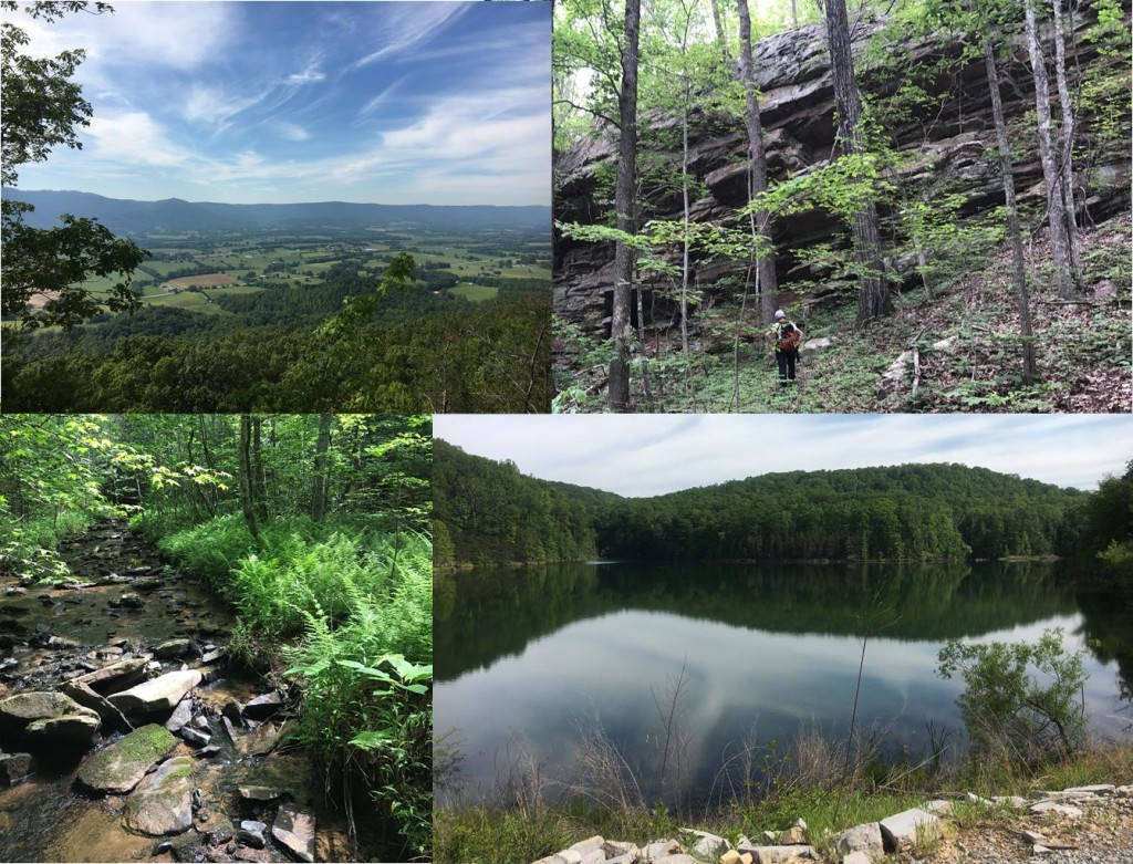The images above highlight a recently preserved 347 acre property in Bledsoe County, TN.  This land is being preserved for it's scenic open space, forests, views of the Sequatchie Valley, and the protection of a natural habitat corridor for wildlife.  Photos (clockwise from top left): Expansive view of Sequatchie Valley along property's ridgeline.  FLC Land Director, Meredith Clebsch, observes escarpment formations near the property's homestead. The property also includes a 15 acre man-made lake.  A fern lined creek runs through the property. 8 species of ferns were noted during a staff site visit.