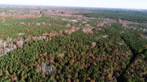 CHESTERFIELD COUNTY, VA (192 acres) - This property is adjoined by a 438-acre Virginia Department of Forestry Easement and a 207-acre conservation easement placed with Foothills Land Conservancy back in 2017.  A 251-acre Virginia Department of Conservation and Recreation Easement occurs in close proximity. Easement restrictions will protect extensive wetlands and creeks that flow into the Chesapeake Bay Watershed. This reduces erosion and sedimentation and thus protects regional water quality.