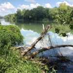 RICHLAND COUNTY, SC (114 acres) - This property is located along the Broad River (pictured), about ten miles from downtown Coumbia, SC. The tract consists of open agricultural fields and forested areas. The property's forests are currently contiguous with those of nearby Harbison State Forest, making it highly likely that the wildlife species using those 2,000+ protected acres would benefit from the protection of the relatively natural habitat on the property as well.