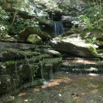 WARREN COUNTY, TN (308 acres) - This property includes ponds, waterfalls, and caves.  The Collins River, designated as a 'scenic river' by the State of TN, runs along roughly 2,500 feet of the property. A portion of the tract includes pasture land and crop farming while close to 71 acres are in woodlands.  Forested bluffs along the river support the most unique plant community found on the property—fire-adapted glade-type species that thrive in thin soil and exposed rock substrates and can tolerate extreme conditions.  One such species, believed to be a very recently described species, was found on the steep limestone bluff above the Collins River on the south side of the property. This species is found only on the Cumberland Plateau and closely adjacent sections of the Eastern Highland Rim.