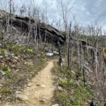 Skeletal forest